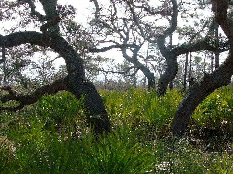 Treebard